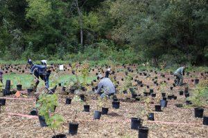 Tree Planting - March 2021 @ On Burnt Bridge Creek near Leverich Park